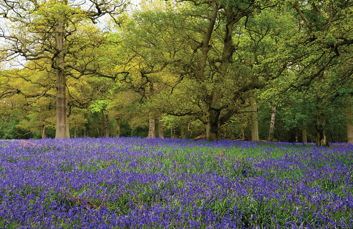 Dunsmore Living Landscape Yours to Explore