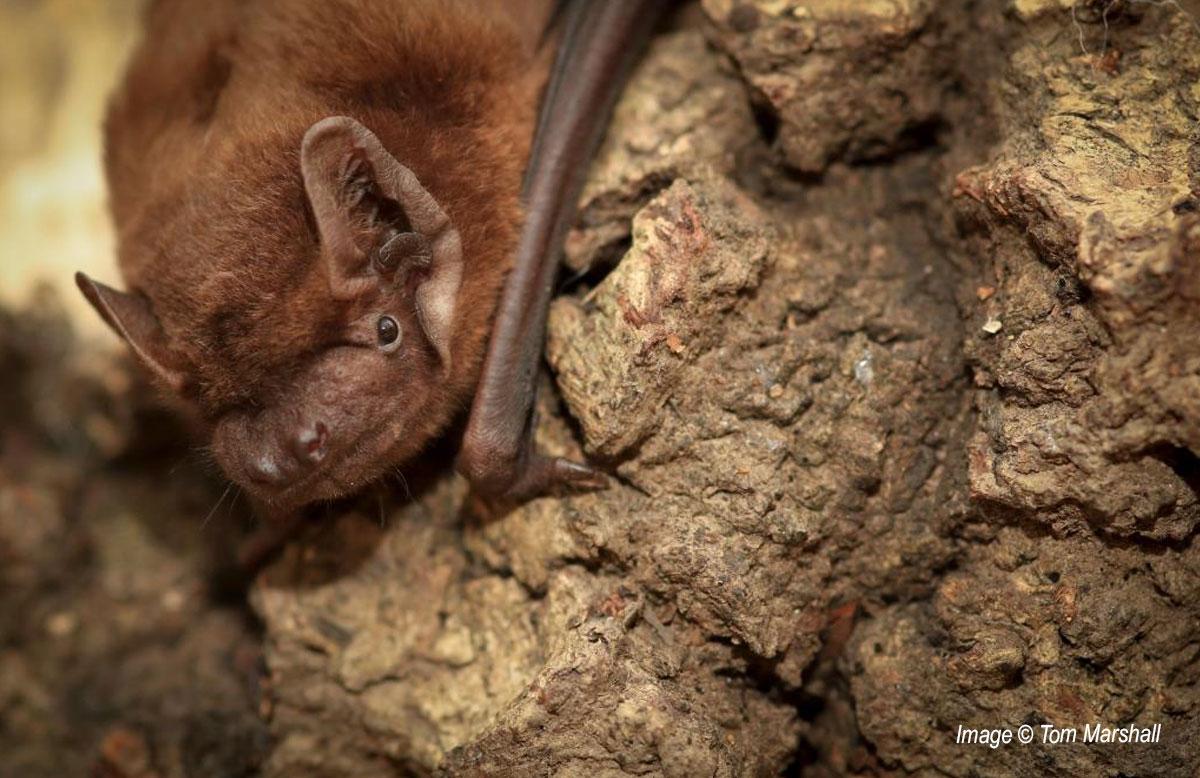 Dunsmore Living Landscape bat walk