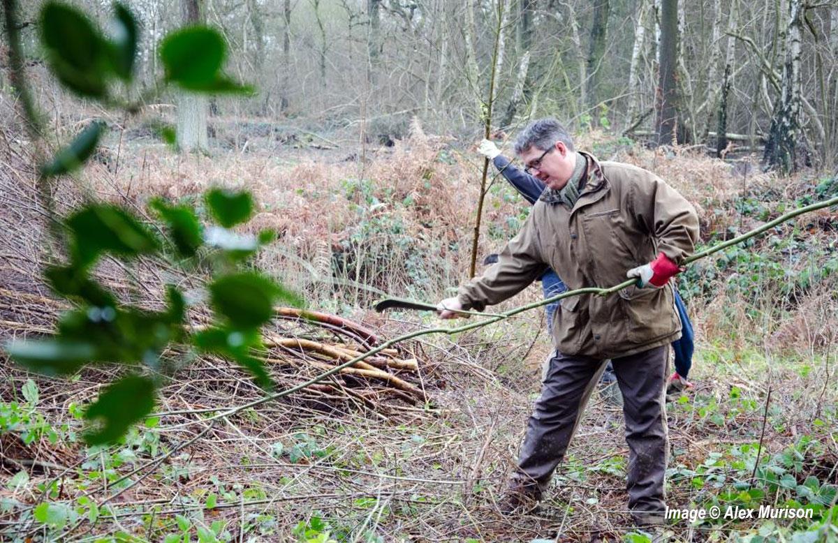 Dunsmore Living Landscape Wappenbury Wood coppicing
