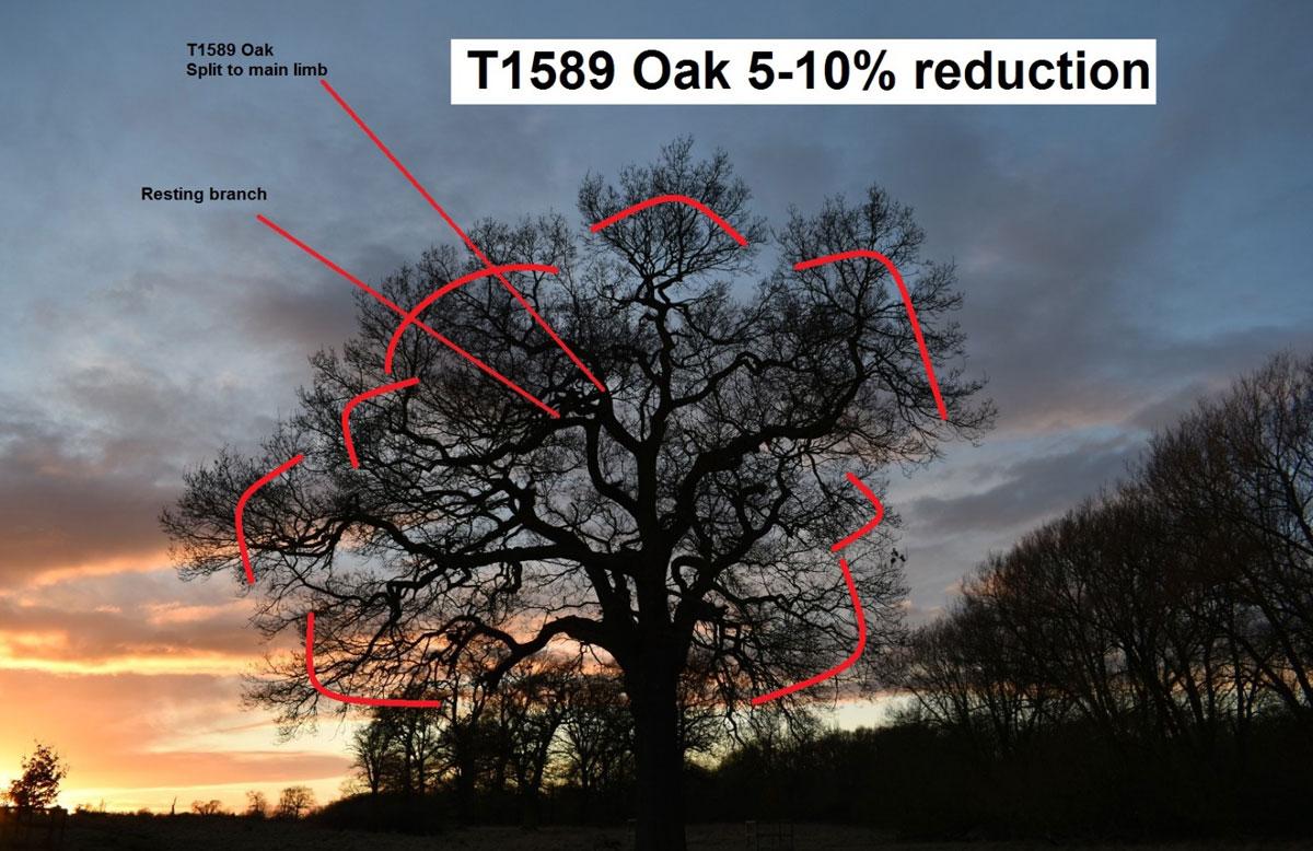 Dunsmore Living Landscape ancient trees