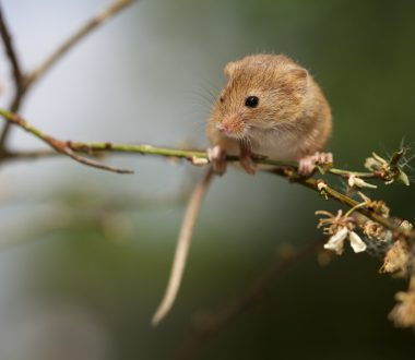 Small Mammal Ecology and Conservation