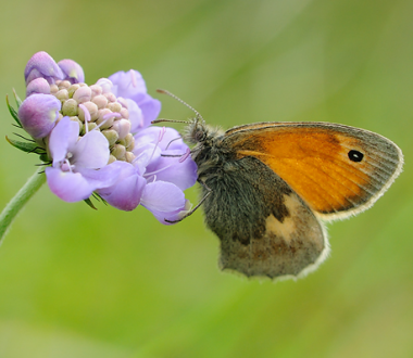 Butterfly and Moth Ecology Walk