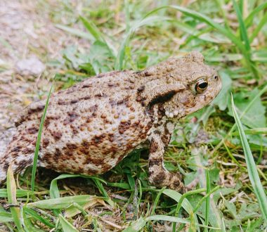 Amphibian and Reptile Ecology Course